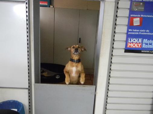 Hund, Reifencenter, Autoreparatur